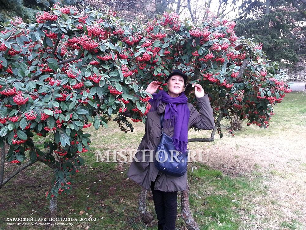 Аллеи Харакского парка, редкие растения - боярышник